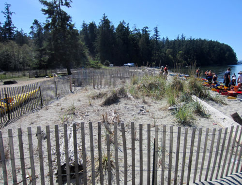 Dune Fencing: Practical and Beachy